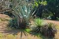 Botanic Gardens (10)