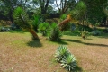 Botanic Gardens (11)