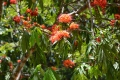 Botanic Gardens (45)