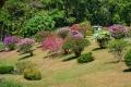 Botanic Gardens (5)