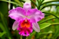 Botanic Gardens (57)