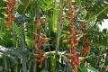 Botanic Gardens (60)