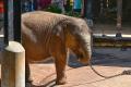 Sloni a ..  (24)