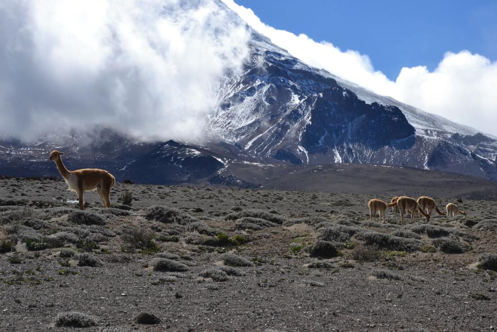 Ekvádor a Galapágy  2. – 20. července 2013